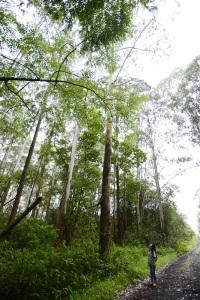 パナエヴァの森とわたし