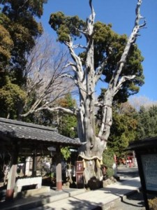 白濱神社4