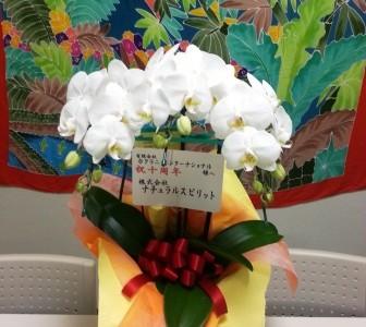 嬉しいサプライズ: 素敵なお花を頂きました!