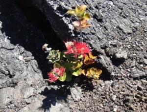 レフアと溶岩