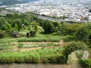 松田山ハーブガーデン2