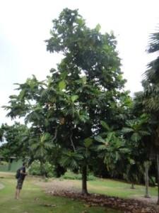 Maui Nui Botanical Garden3
