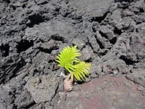 溶岩大地とシダ