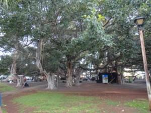 バニヤンツリー3