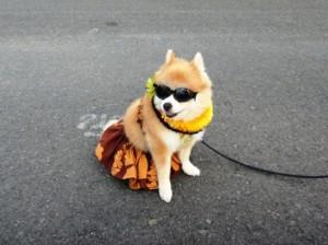 ハワイ犬3