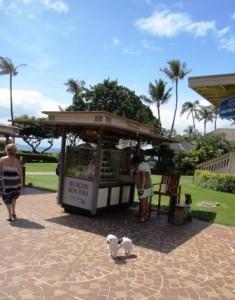 ハワイ犬4