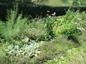 薬香草園12