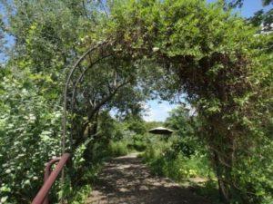 薬香草園5