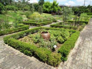 薬香草園4