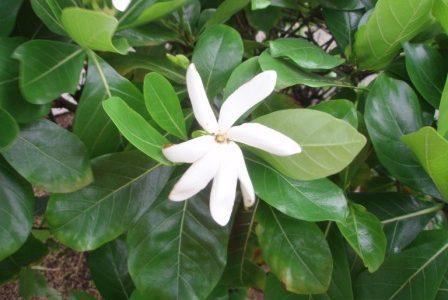 大人女性のみなさん、今年もあと2カ月。でも変わるには十分な時間☆ & 自然療法セミナーにお呼ばれしてハワイのお話をします。。