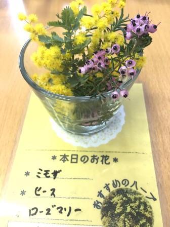 生活の木20170324