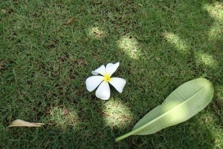 新連載スタート!: Lani Lani「ディープなハワイ 神話・聖地・歴史のお話 」