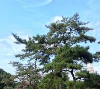自然療法家はチェックしたい:NHKスペシャル 「人体 神秘の巨大ネットワーク」☆