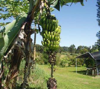 自分のために行動! バナナのHRNフラワーエッセンス & メルマガ配信しました☆彡