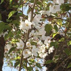大人女性のみなさんへ:花粉症と春のストレスケアについて☆彡