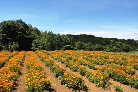 20日からは、二十四節気の「穀雨」。日本の自然暦の巡りで暮らす☆彡