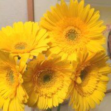 アンティー・モコ流:第3チャクラのモヤ玉お掃除に「黄色ガーベラ」を☆彡