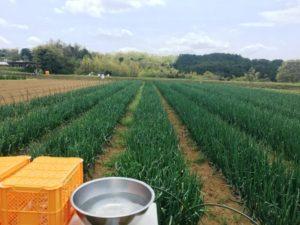 豊受農園4