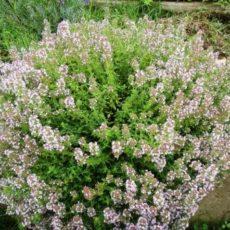 ハーブの種まきの季節 & 次回の「ALOHA&PONOホリスティック・ケア」日程決まりました☆彡