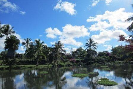 次回のALOHA & PONO  ホリステイィック・ケアのテーマは、ハワイの癒しの知恵  &         ハワイを訪れるかたへ